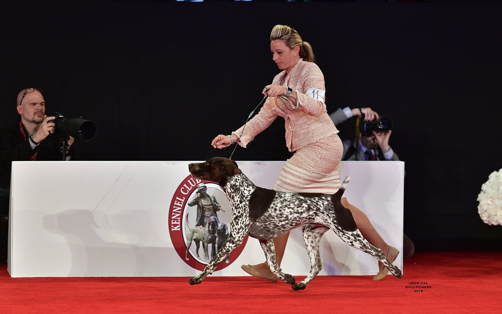 Example of a German Short-haired Pointer.