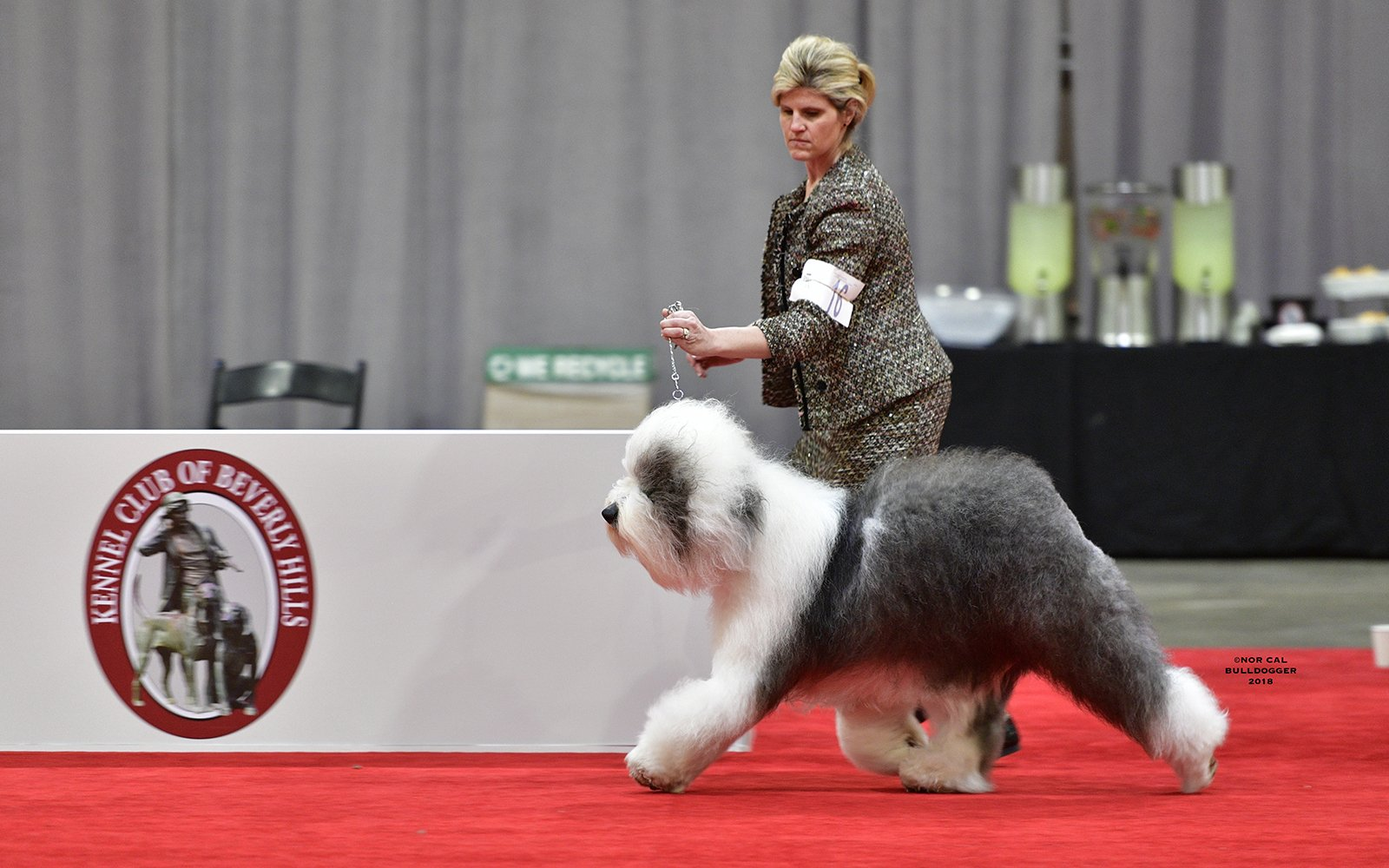 Example of an Old English Sheepdog.