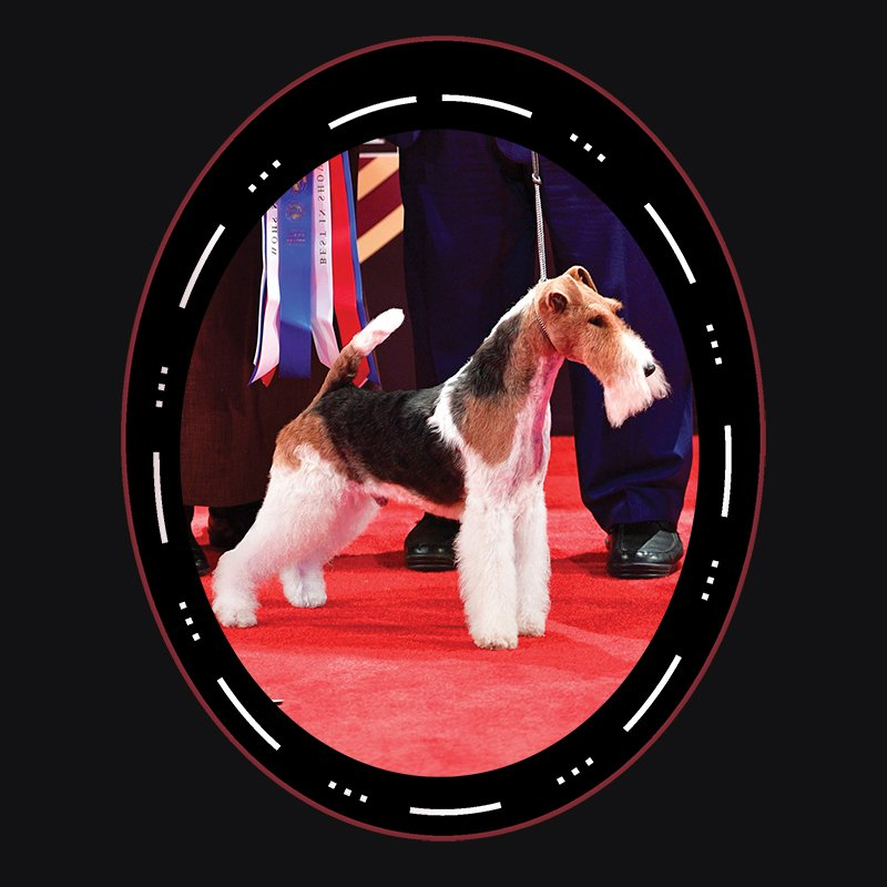 Best In Show - 2017 Terrier Group GCH CH Kingarthur Van Foliny Home (D) Wire Fox Terrier