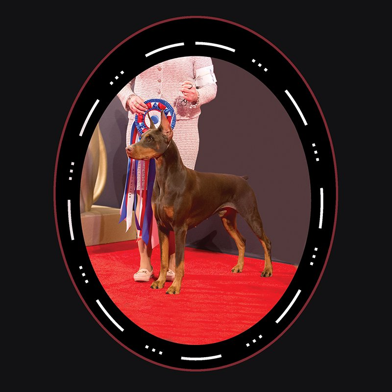 "Best In Show - 2018 Working Group Winner ""Rip"" Doberman Pinscher"