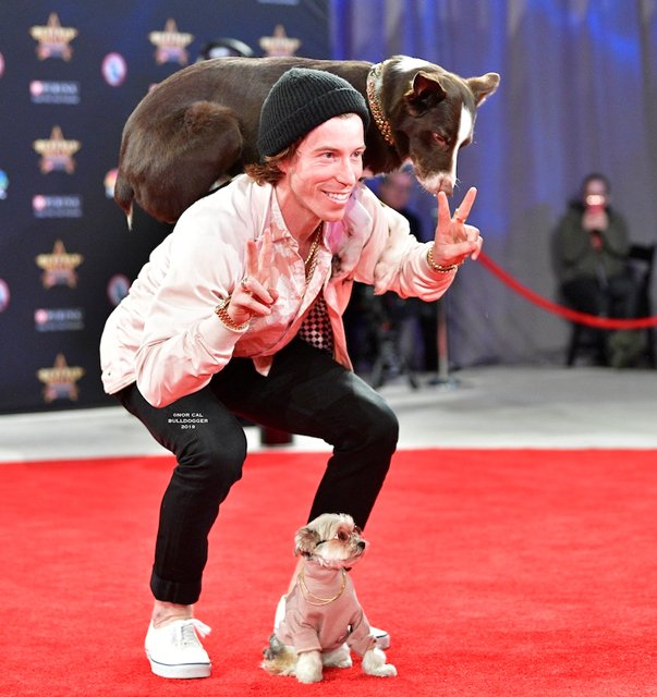 beverly hills dog show 2020