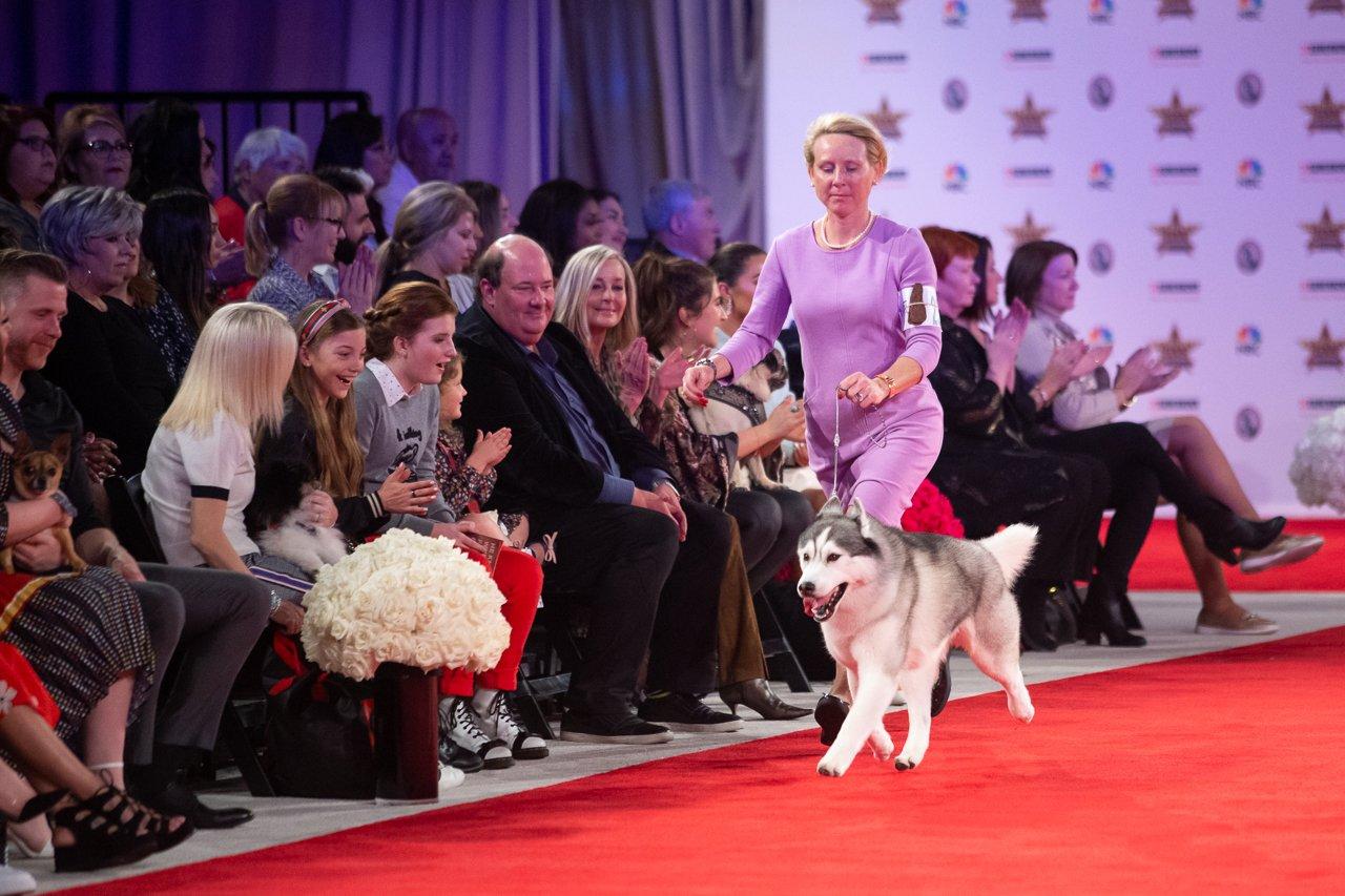 2020 BIS Siberian Husky