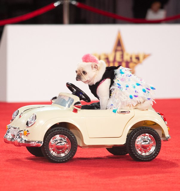 Puppy riding in a toy car